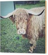 Highland Cow Wood Print