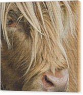 Highland Cow Portrait Wood Print