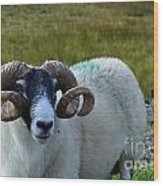 Highland Sheep Wood Print