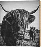 Highlander 1 Wood Print
