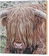 Highlands Coo Wood Print