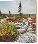 Highlands Of West Virginias Dolly Sods Wood Print