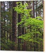 Highlight Wood Print