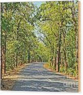 Highway In The Forest Wood Print