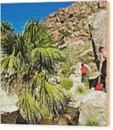 Hikers At Oasis On Borrego Palm Canyon Trail In Anza-borrego Desert Sp-ca  Wood Print