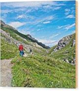 Hiking On Savage River Trail In Denali Np-ak    Wood Print