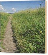 Hiking Path In Devon England Wood Print