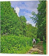 Hiking Trail Along Rivier Du Nord In The Laurentians North Of Montreal-qc Wood Print