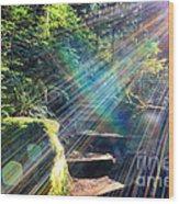 Hiking Trail Sun Flares Wood Print