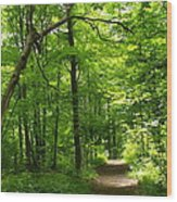 Hiking Trails To Mont Morency Falls Wood Print