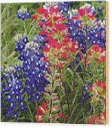 Hill Country Bloom Wood Print