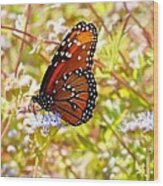 Hill Country Butterfly Wood Print