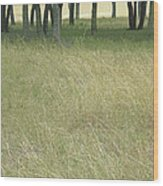 Hill Country Calm Wood Print