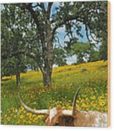 Hill Country Longhorn Wood Print