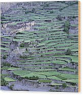 Hill Modified For Agriculture, Tetang Wood Print