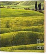 Hills Of Toscany Wood Print