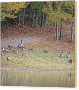 Hillside Of Canadian Geese Wood Print