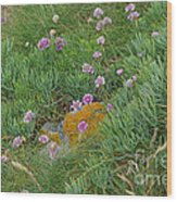 Hillside Of Wildflowers Wood Print