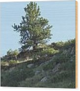 Hillside Scenery With White Tail Buck. Wood Print