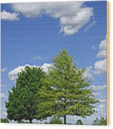 Hilltop Trees Wood Print