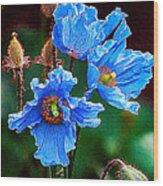 Himalayan Blue Poppy Flower Wood Print