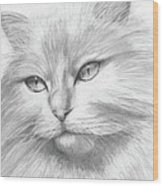 Himalayan Cat Wood Print