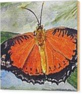 Himalayan Red Lacewing Wood Print