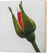 Hint Of A Rose Wood Print