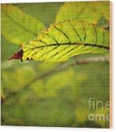 Hint Of Autumn Wood Print