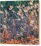 Hint Of Fall Colors 15813 Wood Print