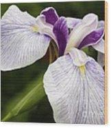 Hint Of Purple Wood Print