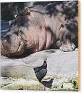Hippo And Friend Wood Print
