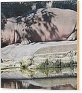 Hippo At Leisure Wood Print