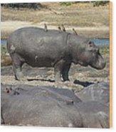 Hippo - Family Wood Print