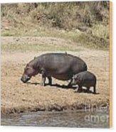 Hippo Mum And Calf Wood Print