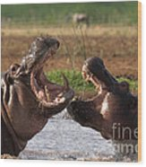 Hippo Threat Display Wood Print