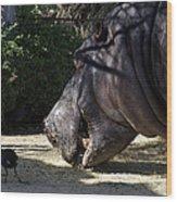 Hippo Vegetarian Wood Print by Graham Palmer