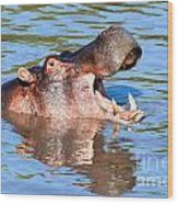 Hippo With Open Mouth In River. Serengeti. Tanzania Wood Print