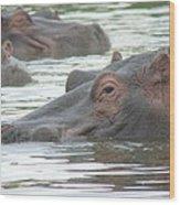 Hippopotamus In Kenya Wood Print