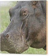 Hippopotamus Okavango Delta Botswana Wood Print