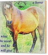 Care About A Horse And He Will Give You His Heart In Return  Wood Print