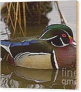His Majesty Wood Duck Wood Print