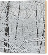 Hoar Frost Covered Trees In Forest Wood Print