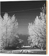 hoar frost covered trees on street in small rural village of Forget Saskatchewan Canada Wood Print