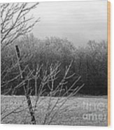 Hoar Frost On The Wood Wood Print