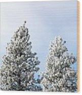Hoarfrost 21 Wood Print