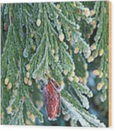 Hoarfrost On Pine Bough Yosemite National Park Wood Print