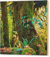 Hoh Grove Wood Print