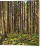 Hoh Rain Forest Wood Print