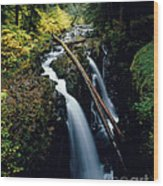 90122 Hoh Rainforest Wood Print